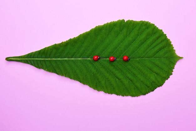 Grünes blatt einer kastanie und drei marienkäfer auf rosa