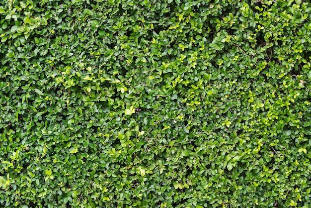 Grünes blatt hintergrund