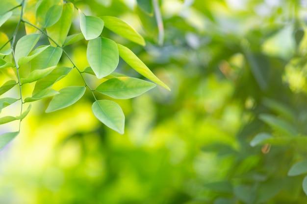 Grünes blatt im wald.