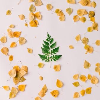 Grünes blatt in form des weihnachtsbaumes an der herbstwand. flach liegen. neujahrskonzept.
