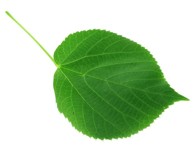 Grünes blatt isoliert auf weiß