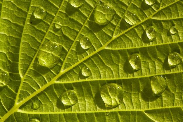 Grünes blatt makro