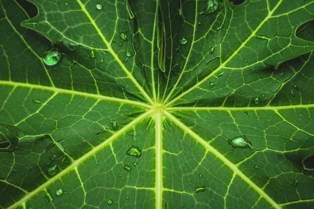 Grünes blatt mit abstraktem muster und tau im naturhintergrund.
