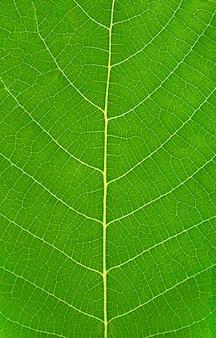 Grünes blatt mit adervertikalenhintergrund