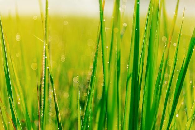 Grünes blatt mit blasentropfen auf blättern
