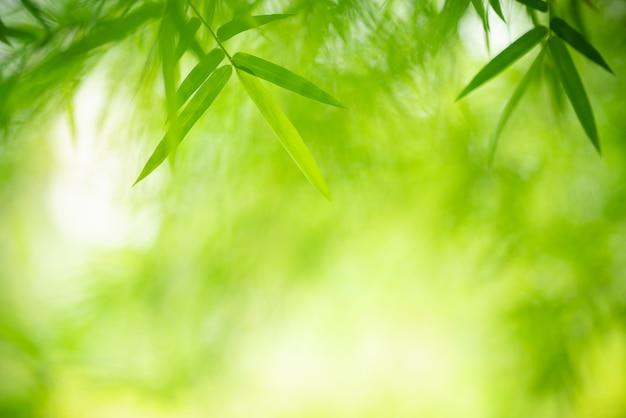 Grünes blatt mit kopienraum unter verwendung als hintergrund- oder tapetennatur.