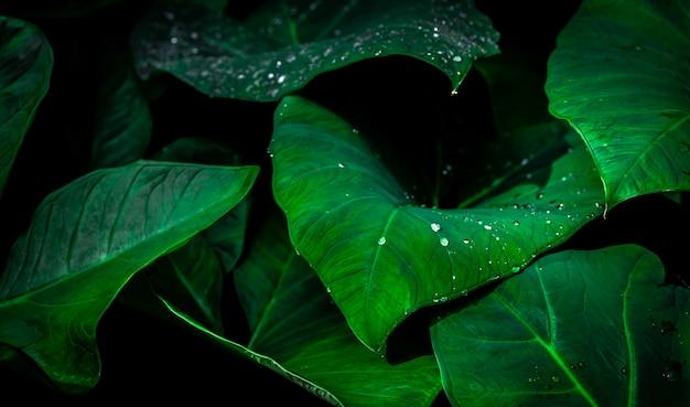 Grünes blatt mit regentropfen im dschungel. wassertropfen auf blättern.
