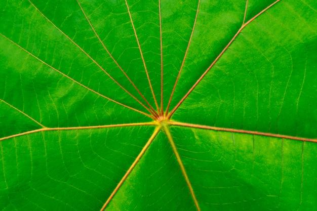 Grünes blatt mit rotem linienbeschaffenheitshintergrund