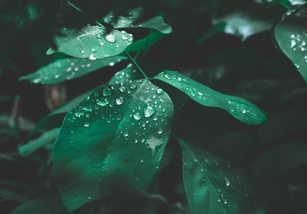 Grünes blatt mit tau auf dunklem naturhintergrund.