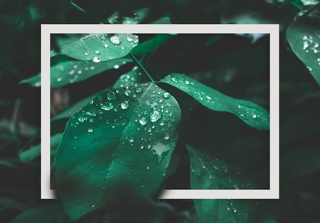 Grünes blatt mit tau und weißem rahmen auf dunklem naturhintergrund.