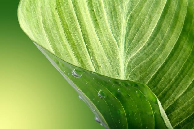 Grünes blatt mit tropfen