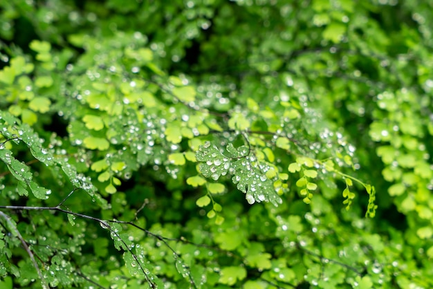 Grünes blatt mit wassertropfen oder wassertropfen