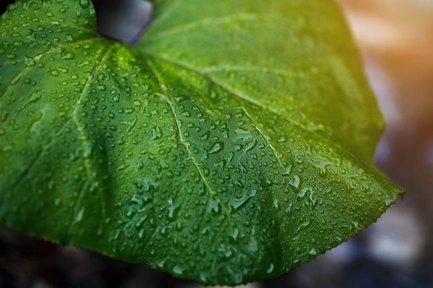 Grünes blatt mit wassertropfen.