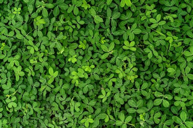 Grünes blatt textur hintergrund
