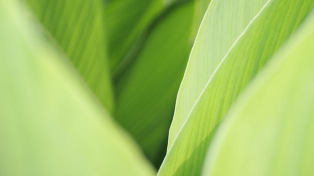 Grünes blatthintergrundnaturgrün schöne pflanzenblätter verwischten weiches grünes frisches helles