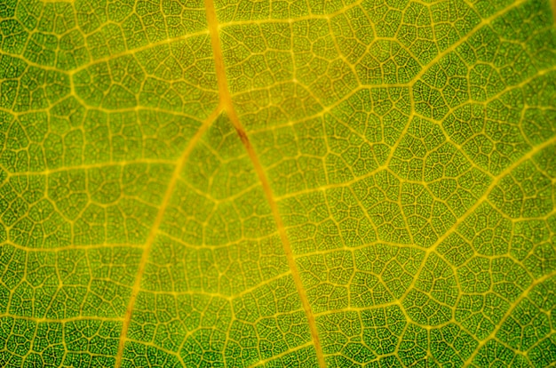 Grünes blattmuster, unscharfer musterhintergrund