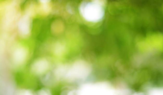 Grünes bokeh auf natur abstrakter unschärfehintergrund grünes bokeh vom baum
