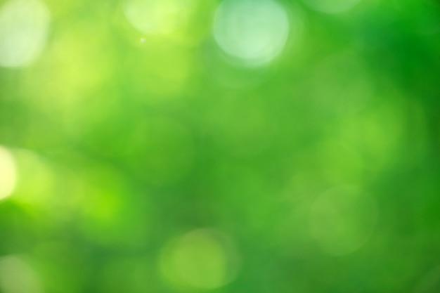 Grünes bokeh aus naturwald unscharf