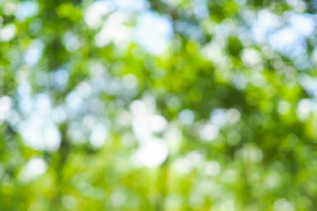 Grünes bokeh des baums verlässt natur aus fokushintergrund heraus