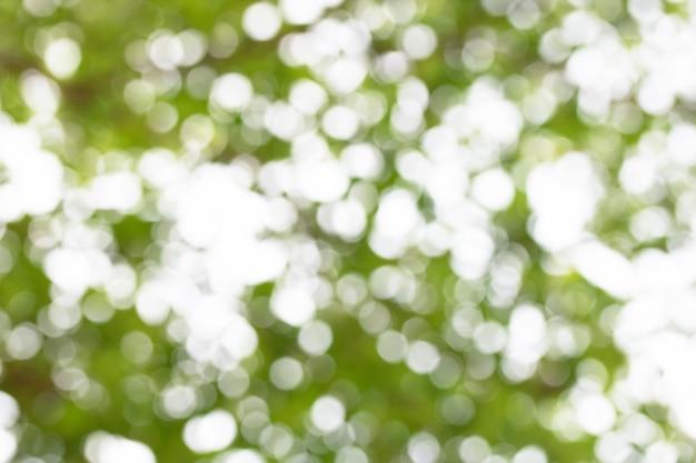 Grünes bokeh licht vom natürlichen unschärfenlicht des baums