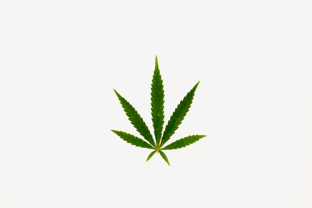 Grünes cannabisblatt