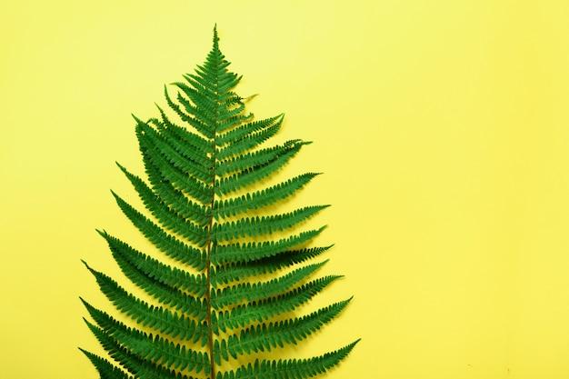 Grünes farnblatt auf gelbem hintergrund mit kopienraum. ansicht von oben.