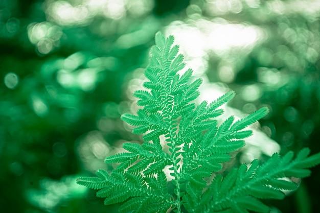Grünes farnblatt mit bokehlichtern