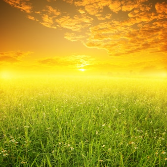 Grünes feld bei sonnenuntergang