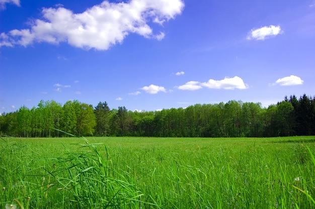 Grünes feld mit bäumen hinter