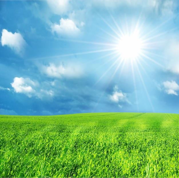 Grünes feld mit einem sonnigen tag