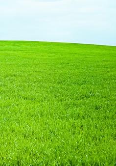 Grünes feld und blauer himmel mit wolken schöne wiese als natur- und umwelthintergrund