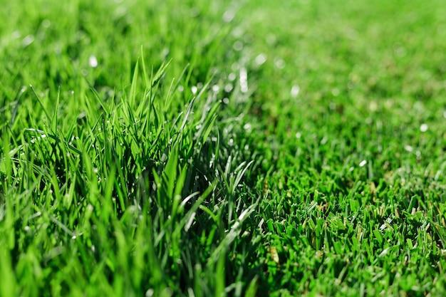 Grünes frisches gras schnitt teilweise grasrasen. unterschied zwischen perfekt gemähtem, geschnittenem gartenrasen oder feldlangem ungeschnittenem gras.