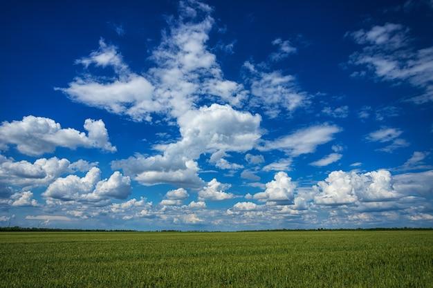 Grünes frühlingsfeld gegen einen blauen himmel mit schönen weißen wolken