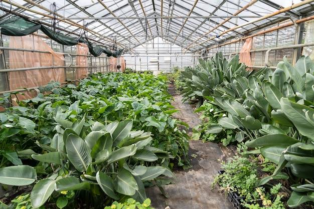 Grünes gewächshaus mit grünen tropischen pflanzen, die in töpfen zum verkauf im blumenladen oder einzelhandelsgeschäft wachsen