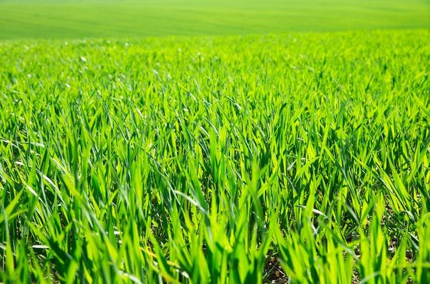 Grünes gras am sonnigen tag
