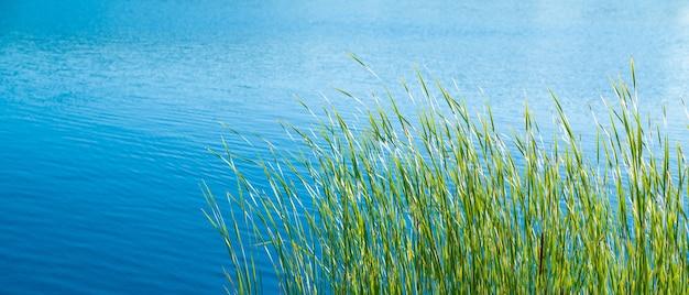 Grünes gras am ufer eines ruhigen sees an einem sonnigen tag