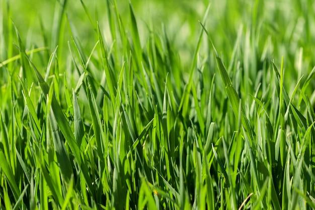 Grünes gras an einem sommertag