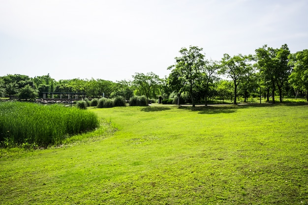 Grünes gras auf einem golfplatz