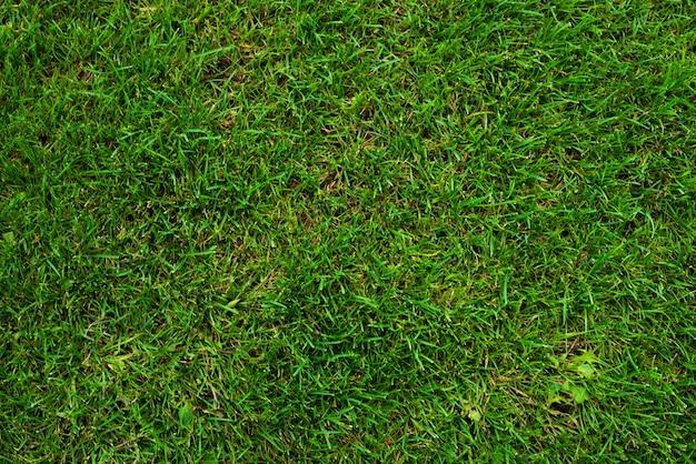 Grünes gras auf fußballplatz als hintergrund