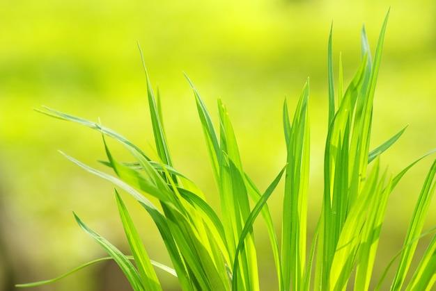 Grünes gras auf grünem hintergrund isoliert