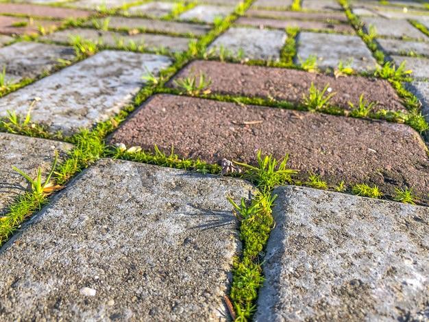Grünes gras, das auf den pflasterungsfliesen im park wächst.