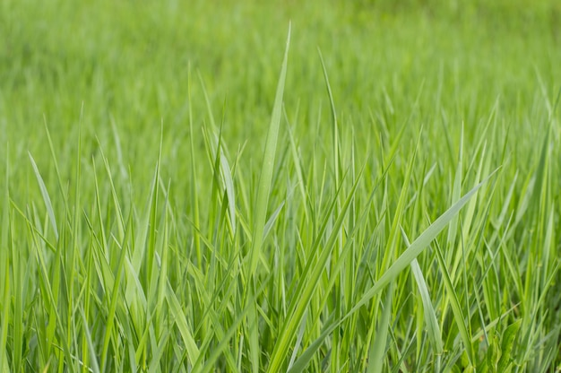 Grünes gras der fotohintergrundbeschaffenheit