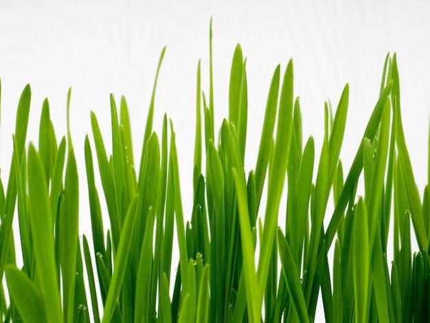 Grünes gras des neuen frühlinges und blattanlage über hölzernem zaunhintergrund.