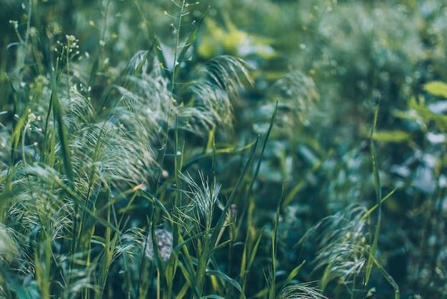 Grünes gras des schönen sommergartens auf einem weichen grünen hintergrund