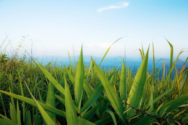 Grünes gras im winter.