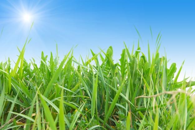 Grünes gras lokalisiert auf dem weißen hintergrund