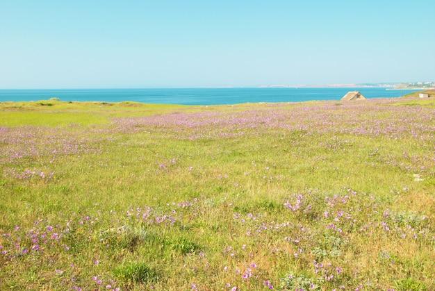 Grünes gras mit blumen, blauem himmel und wolken.