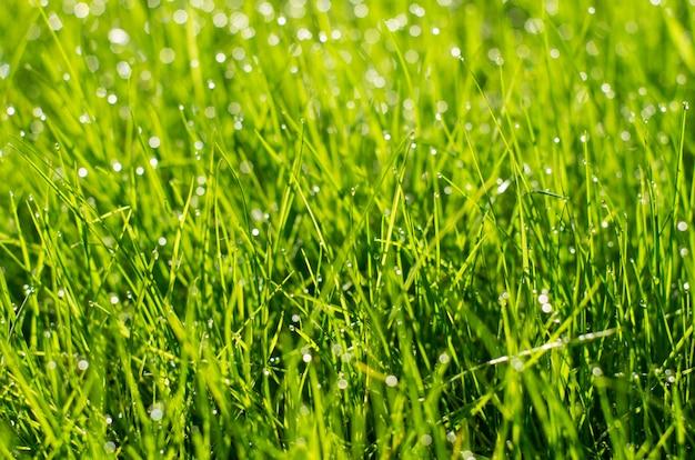 Grünes gras mit funkelnden tropfen des taus, unscharfer hintergrund