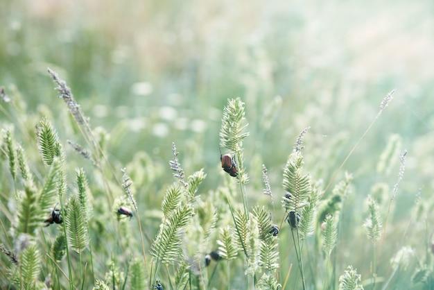 Grünes gras mit käfern in der steppe der ukraine, sommertag
