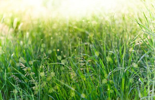 Grünes gras mit regentropfen